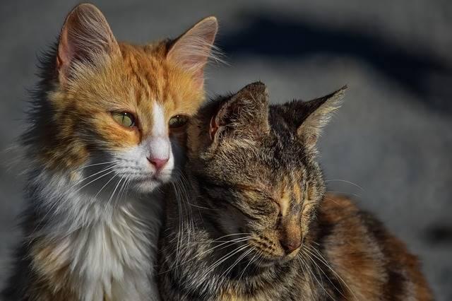Kucing Bisa Menjadi Penghambat Kegiatan Ngeblog