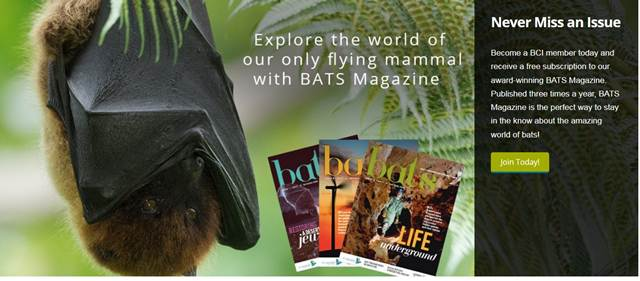 Websitenya Para Penyayang Saudaranya Batman - Bat Conservation International